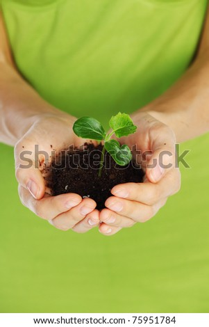 plant in the women hands - stock photo