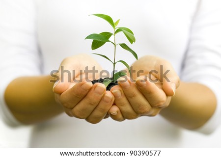 Plant in woman hands - stock photo