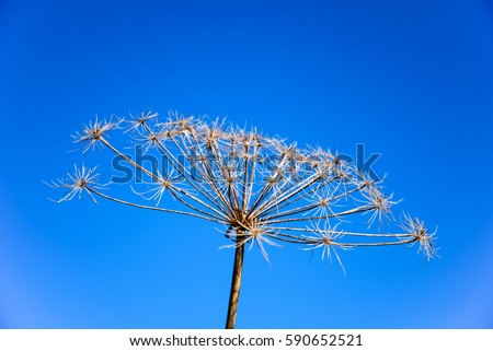 Plant infructescence by a blue sky