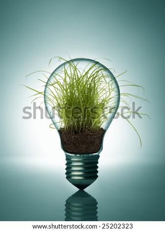Plant inside bulb - stock photo