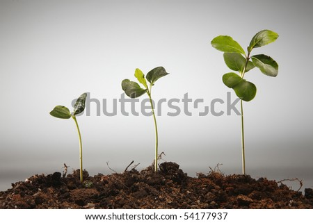 plant is growing in different stage - stock photo