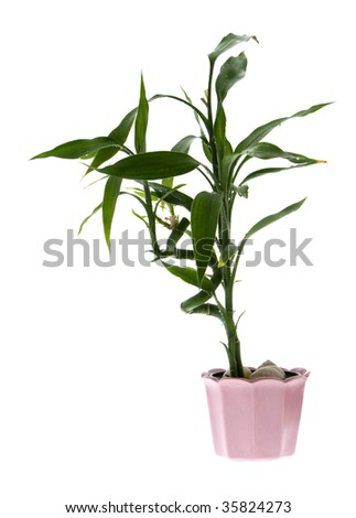 Plant isolated on a white background