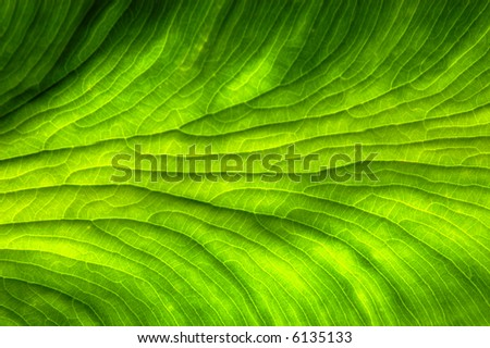 Plant leaf background - stock photo