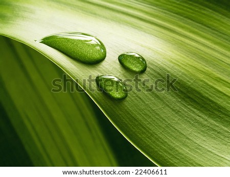 Plant leaf with water drops