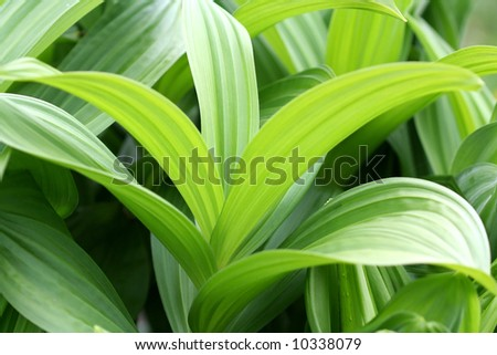Plant leaves closeup in the botanical gardens - stock photo