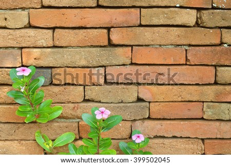 Plant little flower on old red bricks wall background - stock photo
