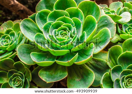 Plant Macro with Vivid Texture and Color; Great for Desert Backgrounds