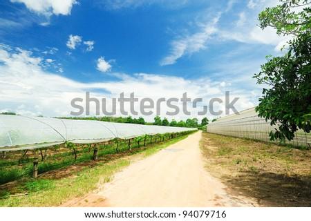 Plant nursery of organic - stock photo