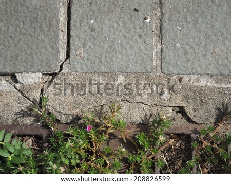 plant on antique concrete floor, texture background