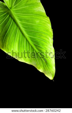 plant on black background - stock photo