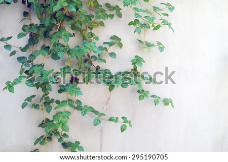 Plant on cement wall. - stock photo
