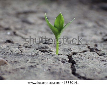 Plant on dry land, Global Warming Background