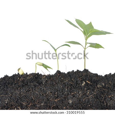 Plant on white background , ecology concept - stock photo