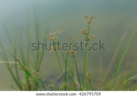 Plant, plants, geed,nature. - stock photo