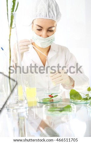 Plant propagation. Biotechnologist examine the plant samples in the laboratory