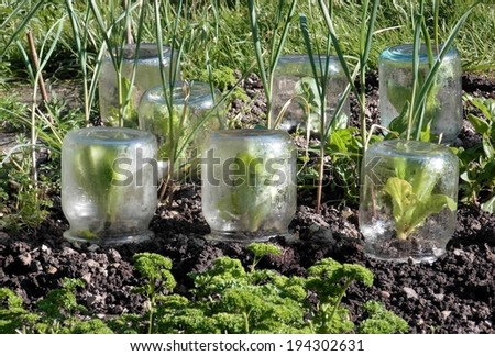plant protection - stock photo