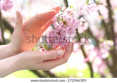Plant protection . Female hands on a background of pink cherry blossoms  - stock photo