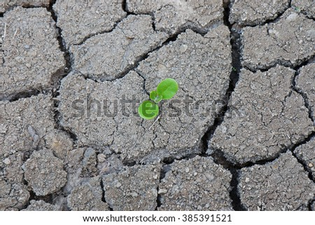 Plant's growing on crack dry soil.