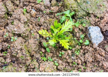 Plant seeding,Close up Young plant growing  - stock photo