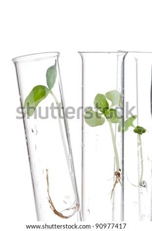 Plant seedling specimen in test tubes over isolated on white background - stock photo