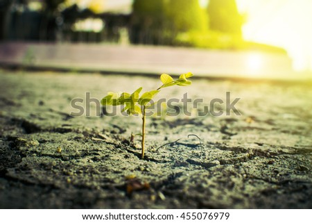 plant seedlings growth - stock photo