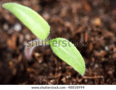plant shoots - stock photo