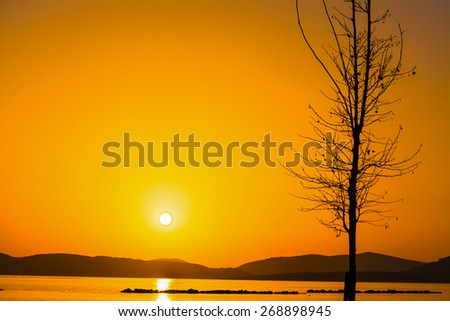 plant silhouette by the sea at sunset - stock photo