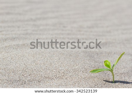 Plant sprouting in the desert in Sahara. Sprout in the desert.  - stock photo