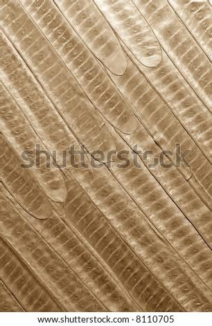 plant texture - stock photo