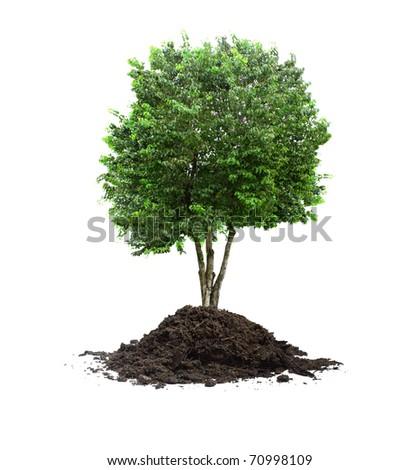 plant tree - stock photo
