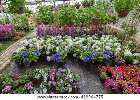 Plant,tree and flower pots in greenhouse - stock photo