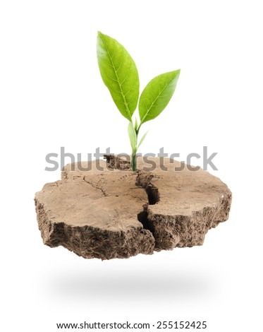 Plant Tree growing on a floating island on white - stock photo