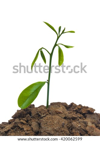plant tree growing on a white background - stock photo