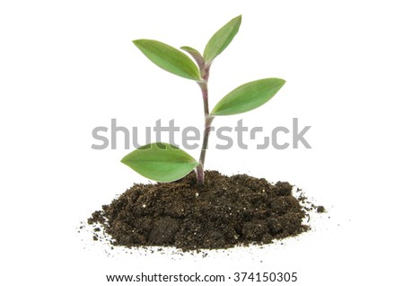 plant tree growing seedling in soil isolated on white background - stock photo