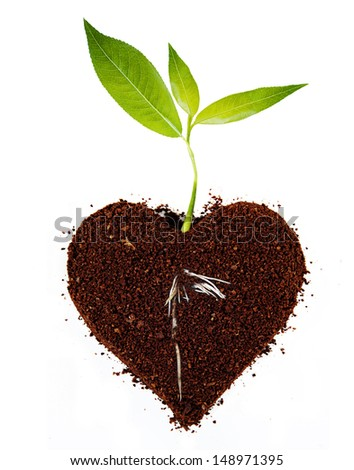 Plant tree in ground with root. - stock photo