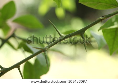 Plant twig with thorns