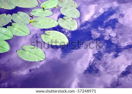 Plant waterlilies in the pond water clean - stock photo