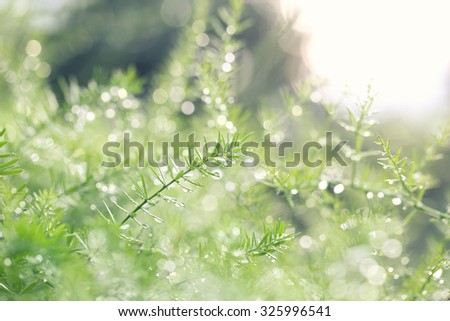Plant with bokeh background - stock photo
