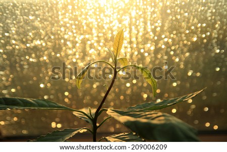 plant with bokeh lights - stock photo
