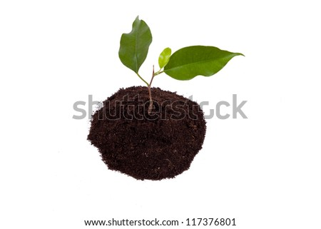 plant with green leaves, and land on the white background