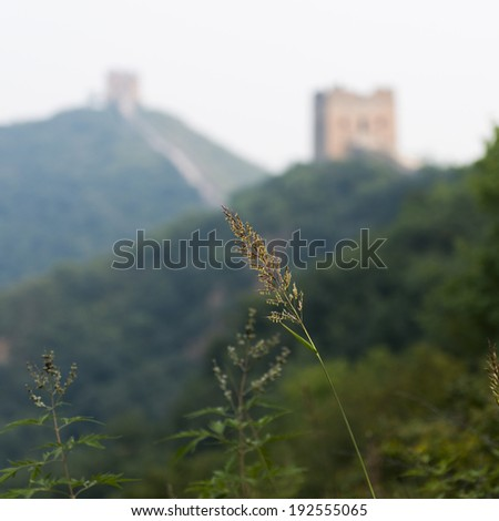 Plant with Jinshanling to Simatai section of Great Wall Of China in the background, Miyun County, Beijing, China - stock photo