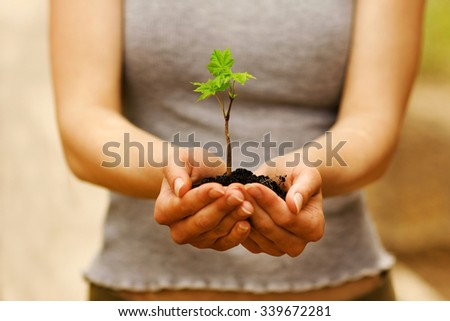 plant with soil in hands - stock photo