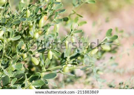 plant with thorns. close-up - stock photo