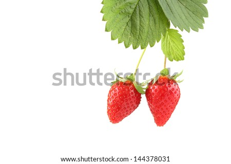plant with two organic strawberries isolated on white - stock photo