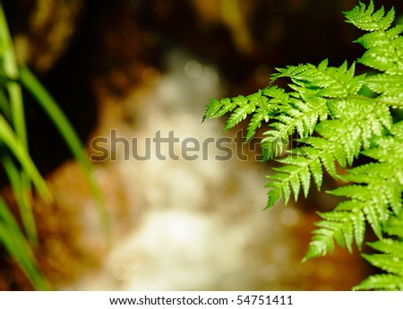 plant with waterfall - stock photo