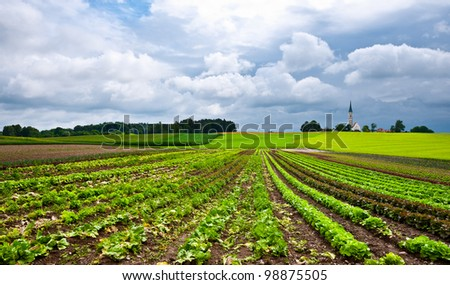 Plantation of Cabbage and Church on the Hill in Bavaria, Germany - stock photo