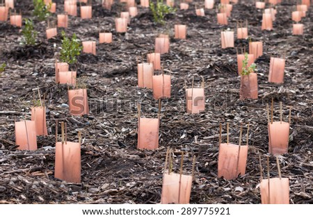 Plantation of native New Zealand plants - stock photo