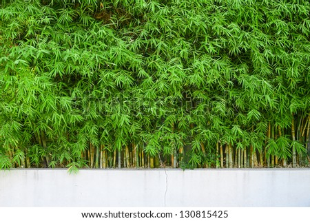 planter of bamboo for fencing - stock photo