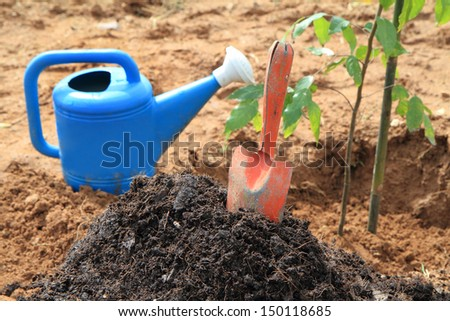 Planting a forest tree  - stock photo