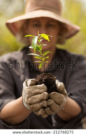 planting a seedling tree - stock photo